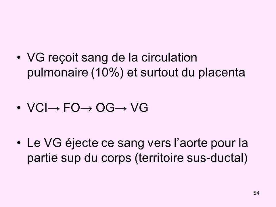54 VG reçoit sang de la circulation pulmonaire (10%) et surtout du placenta VCI FO OG VG Le VG éjecte ce sang vers laorte pour la partie sup du corps