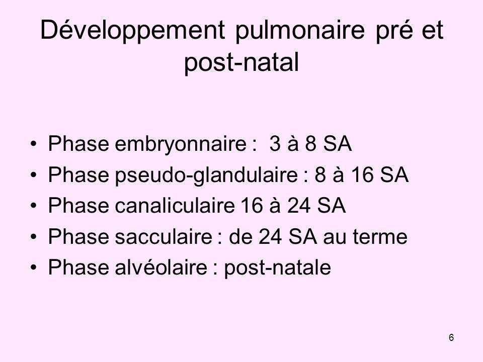 6 Développement pulmonaire pré et post-natal Phase embryonnaire : 3 à 8 SA Phase pseudo-glandulaire : 8 à 16 SA Phase canaliculaire 16 à 24 SA Phase s