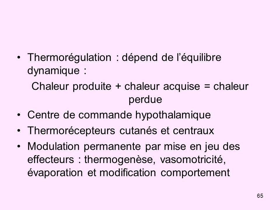 65 Thermorégulation : dépend de léquilibre dynamique : Chaleur produite + chaleur acquise = chaleur perdue Centre de commande hypothalamique Thermoréc