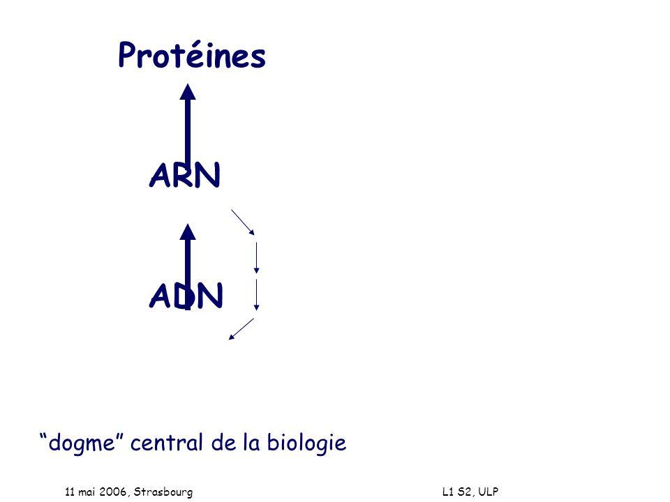 11 mai 2006, Strasbourg L1 S2, ULP Protéines ARN ADN dogme central de la biologie