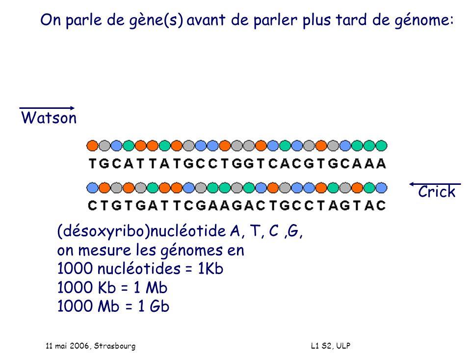 11 mai 2006, Strasbourg L1 S2, ULP On parle de gène(s) avant de parler plus tard de génome: Watson Crick (désoxyribo)nucléotide A, T, C,G, on mesure l