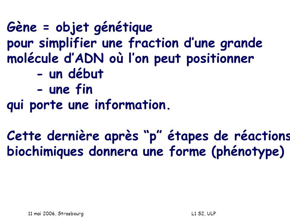 11 mai 2006, Strasbourg L1 S2, ULP Gène = objet génétique pour simplifier une fraction dune grande molécule dADN où lon peut positionner - un début -