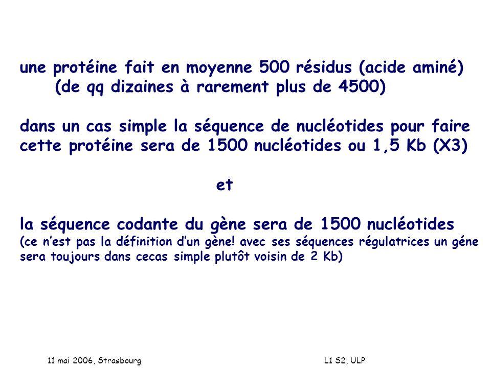 11 mai 2006, Strasbourg L1 S2, ULP une protéine fait en moyenne 500 résidus (acide aminé) (de qq dizaines à rarement plus de 4500) dans un cas simple