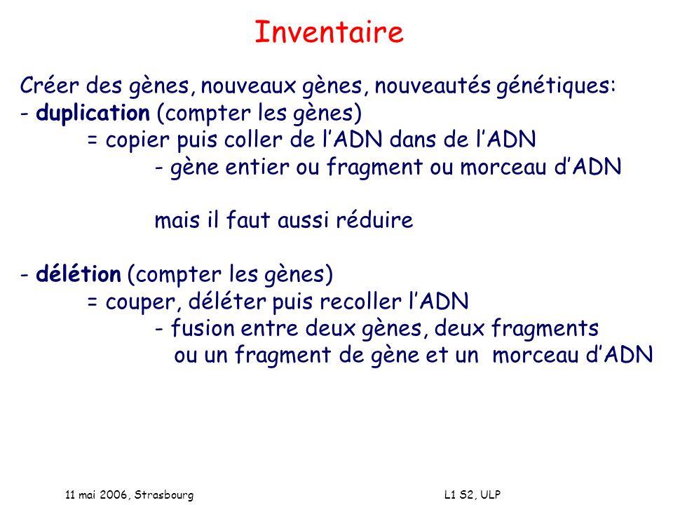 11 mai 2006, Strasbourg L1 S2, ULP Créer des gènes, nouveaux gènes, nouveautés génétiques: - duplication (compter les gènes) = copier puis coller de l