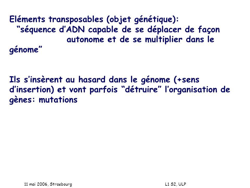 11 mai 2006, Strasbourg L1 S2, ULP Eléments transposables (objet génétique): séquence dADN capable de se déplacer de façon autonome et de se multiplie