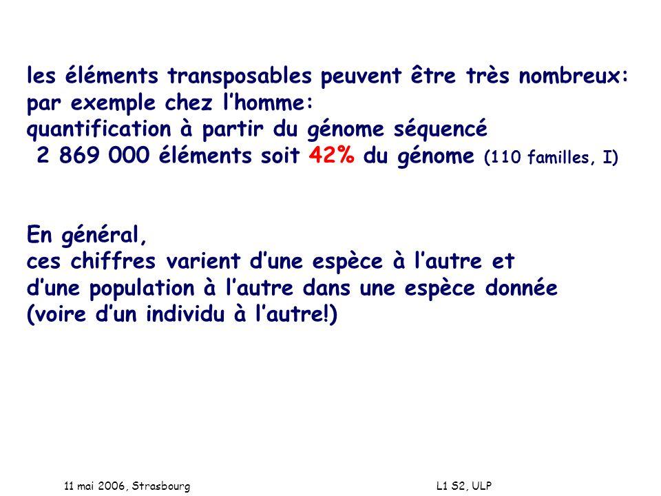 11 mai 2006, Strasbourg L1 S2, ULP les éléments transposables peuvent être très nombreux: par exemple chez lhomme: quantification à partir du génome s