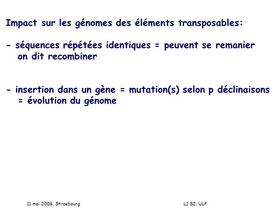 11 mai 2006, Strasbourg L1 S2, ULP Impact sur les génomes des éléments transposables: - séquences répétées identiques = peuvent se remanier on dit rec