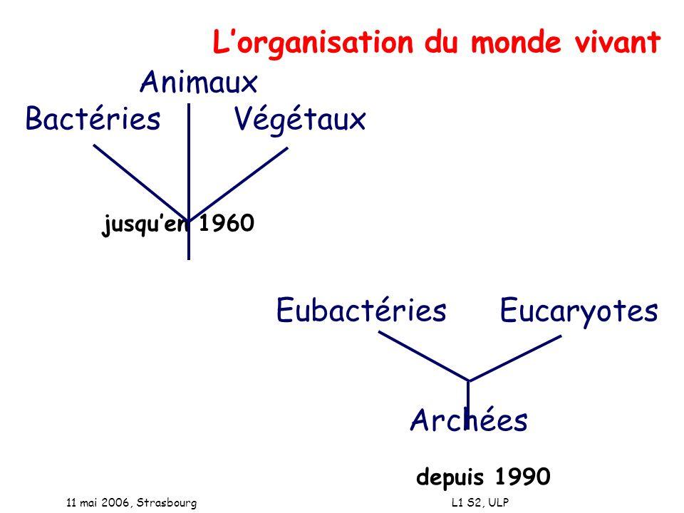 11 mai 2006, Strasbourg L1 S2, ULP Animaux Bactéries Végétaux jusquen 1960 Lorganisation du monde vivant Eubactéries Eucaryotes Archées depuis 1990