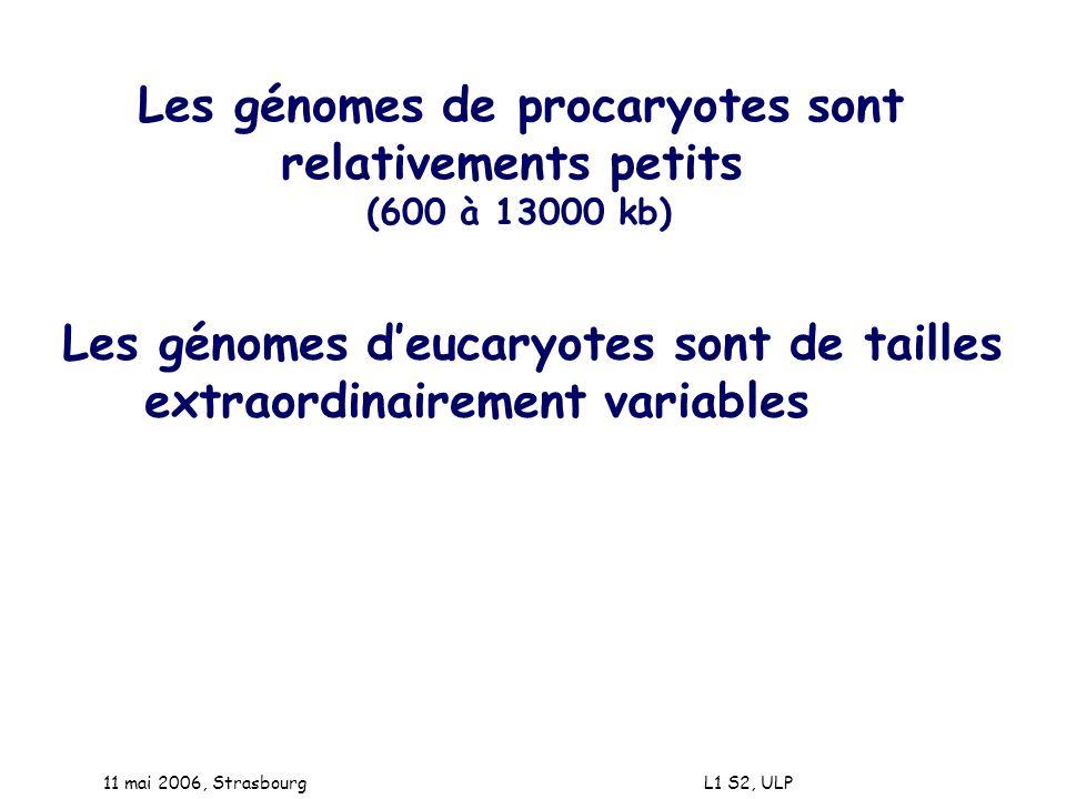 11 mai 2006, Strasbourg L1 S2, ULP Les génomes de procaryotes sont relativements petits (600 à 13000 kb) Les génomes deucaryotes sont de tailles extra