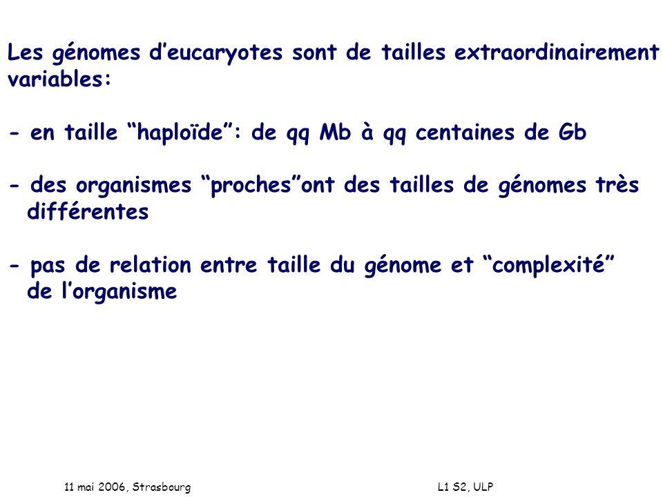 11 mai 2006, Strasbourg L1 S2, ULP Les génomes deucaryotes sont de tailles extraordinairement variables: - en taille haploïde: de qq Mb à qq centaines