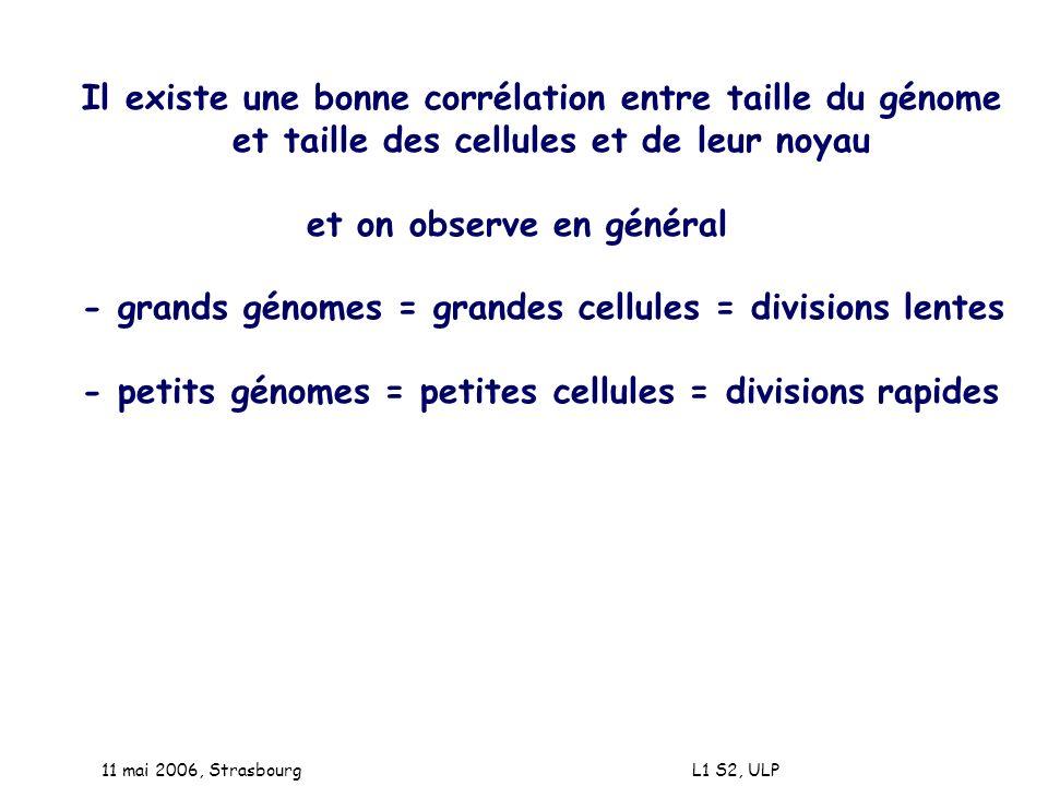 11 mai 2006, Strasbourg L1 S2, ULP Il existe une bonne corrélation entre taille du génome et taille des cellules et de leur noyau et on observe en gén