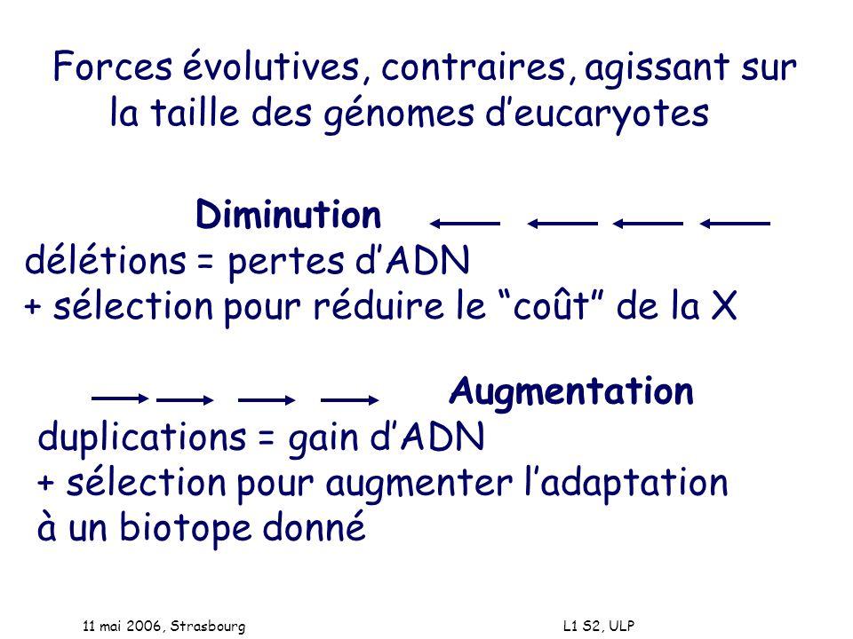 11 mai 2006, Strasbourg L1 S2, ULP Forces évolutives, contraires, agissant sur la taille des génomes deucaryotes Diminution délétions = pertes dADN +