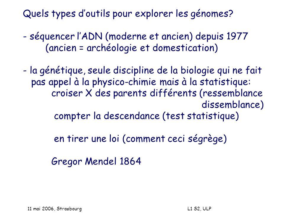 11 mai 2006, Strasbourg L1 S2, ULP Quels types doutils pour explorer les génomes? - séquencer lADN (moderne et ancien) depuis 1977 (ancien = archéolog