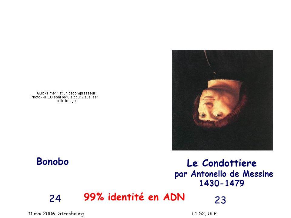 11 mai 2006, Strasbourg L1 S2, ULP Bonobo Le Condottiere par Antonello de Messine 1430-1479 99% identité en ADN 24 23