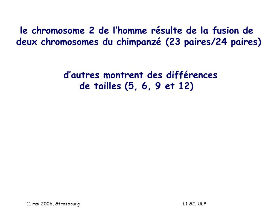 11 mai 2006, Strasbourg L1 S2, ULP le chromosome 2 de lhomme résulte de la fusion de deux chromosomes du chimpanzé (23 paires/24 paires) dautres montr