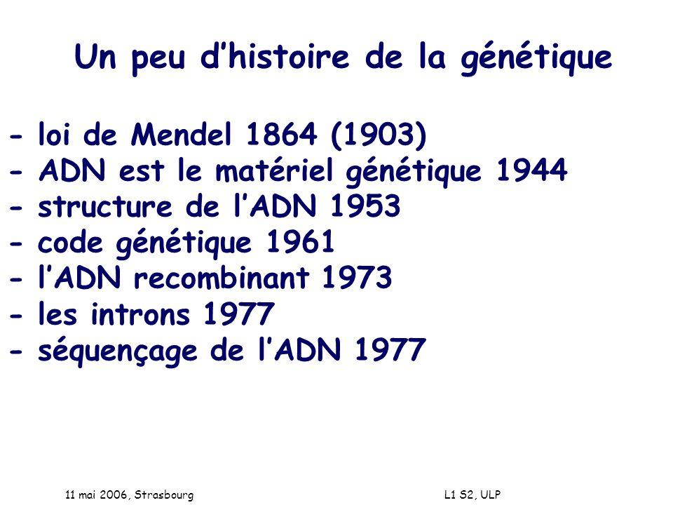11 mai 2006, Strasbourg L1 S2, ULP Un peu dhistoire de la génétique - loi de Mendel 1864 (1903) - ADN est le matériel génétique 1944 - structure de lA