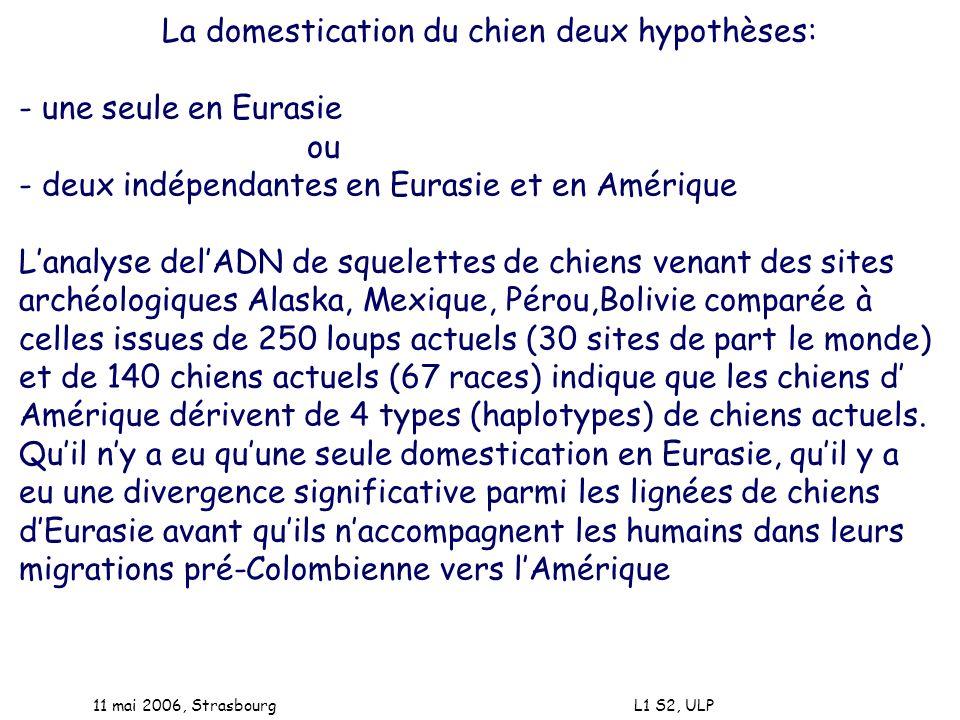 11 mai 2006, Strasbourg L1 S2, ULP La domestication du chien deux hypothèses: - une seule en Eurasie ou - deux indépendantes en Eurasie et en Amérique