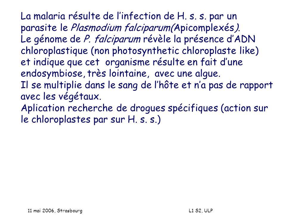 11 mai 2006, Strasbourg L1 S2, ULP La malaria résulte de linfection de H. s. s. par un parasite le Plasmodium falciparum(Apicomplexés). Le génome de P