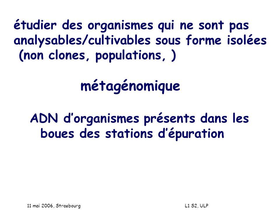 11 mai 2006, Strasbourg L1 S2, ULP étudier des organismes qui ne sont pas analysables/cultivables sous forme isolées (non clones, populations, ) métag