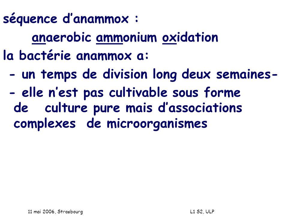 11 mai 2006, Strasbourg L1 S2, ULP séquence danammox : anaerobic ammonium oxidation la bactérie anammox a: - un temps de division long deux semaines-