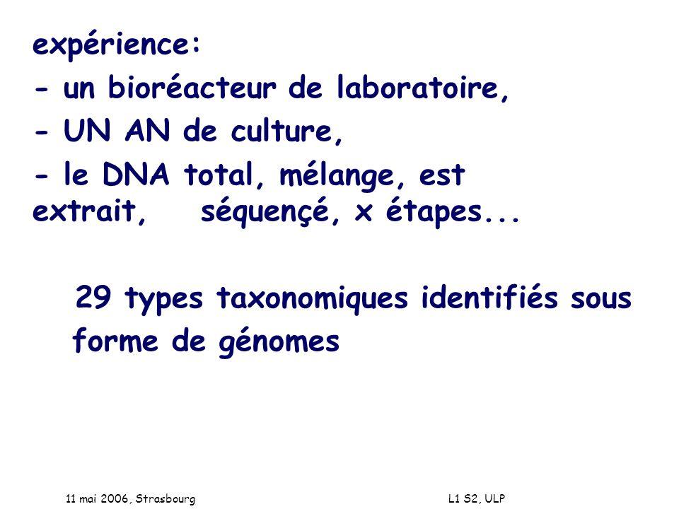 11 mai 2006, Strasbourg L1 S2, ULP expérience: - un bioréacteur de laboratoire, - UN AN de culture, - le DNA total, mélange, est extrait, séquençé, x