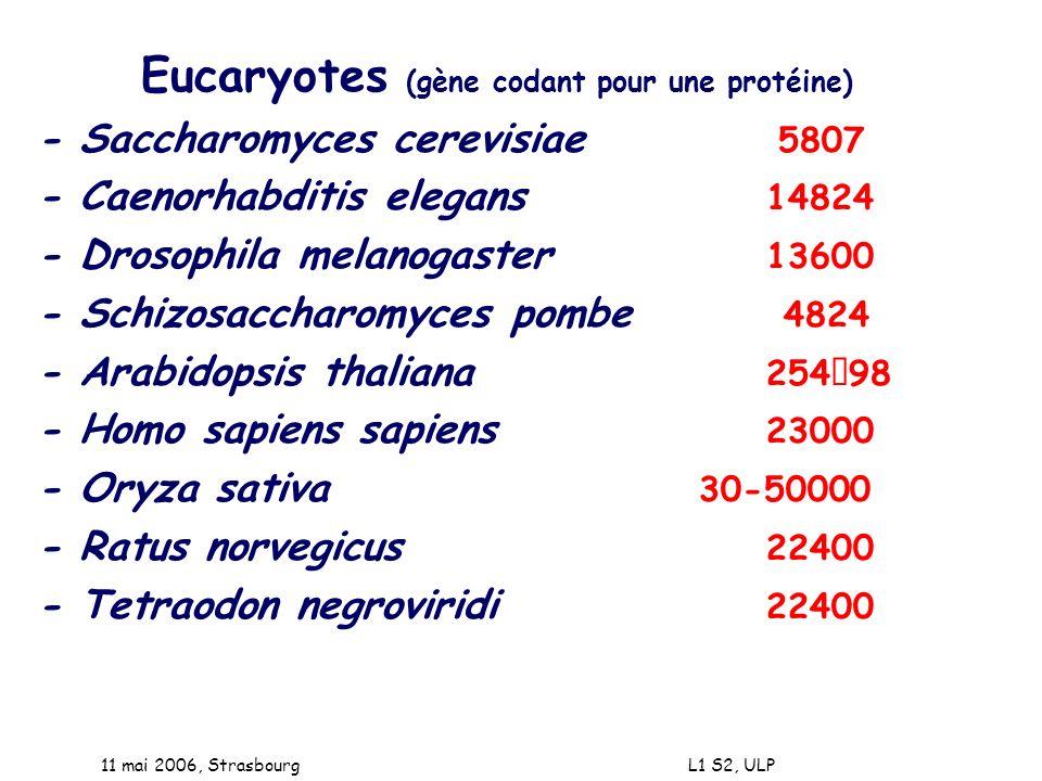11 mai 2006, Strasbourg L1 S2, ULP Eucaryotes (gène codant pour une protéine) - Saccharomyces cerevisiae 5807 - Caenorhabditis elegans 14824 - Drosoph