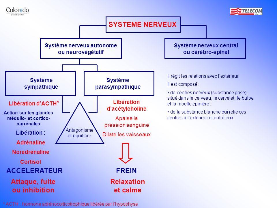 SYSTEME NERVEUX Système nerveux autonome ou neurovégétatif Il régit les relations avec lextérieur. Il est composé : de centres nerveux (substance gris