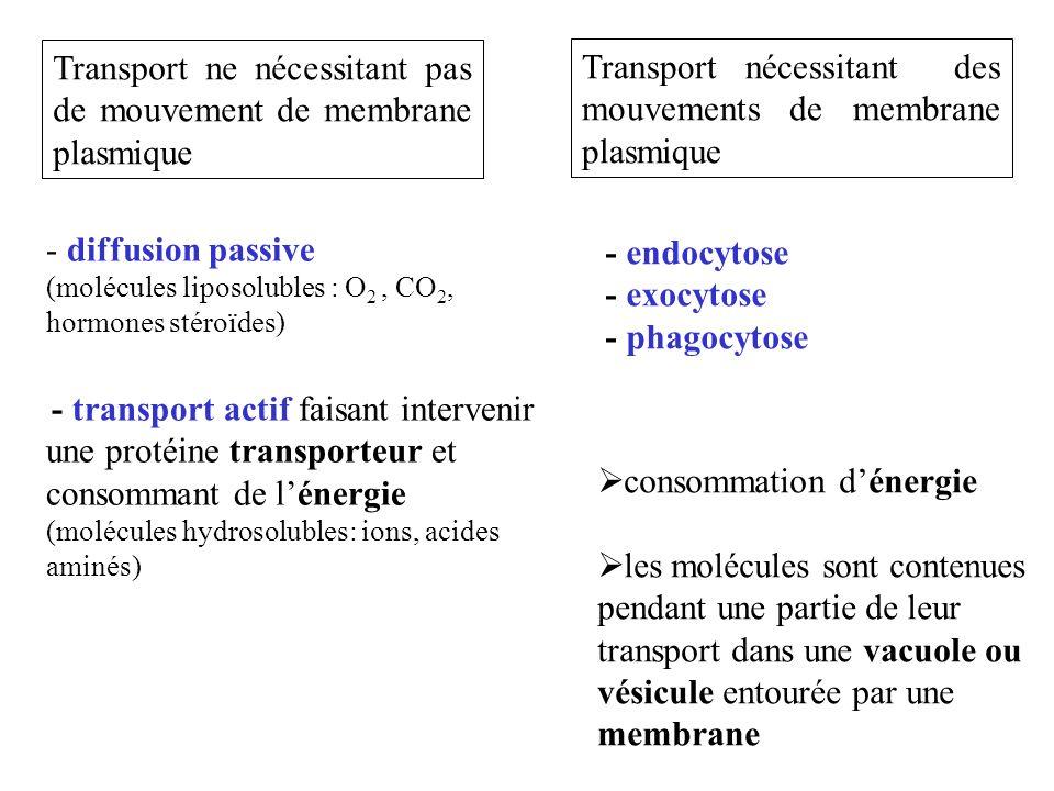 Transport ne nécessitant pas de mouvement de membrane plasmique Transport nécessitant des mouvements de membrane plasmique - diffusion passive (molécu