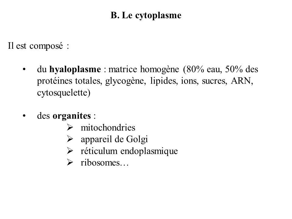 B. Le cytoplasme Il est composé : du hyaloplasme : matrice homogène (80% eau, 50% des protéines totales, glycogène, lipides, ions, sucres, ARN, cytosq
