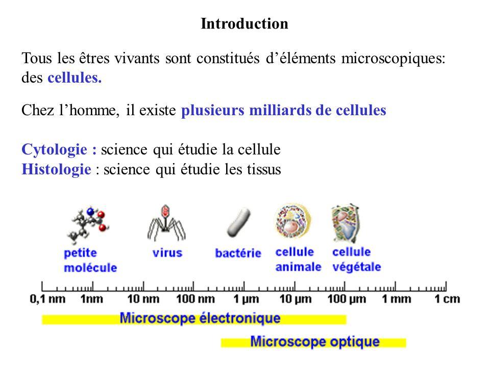 Tous les êtres vivants sont constitués déléments microscopiques: des cellules. Chez lhomme, il existe plusieurs milliards de cellules Cytologie : scie