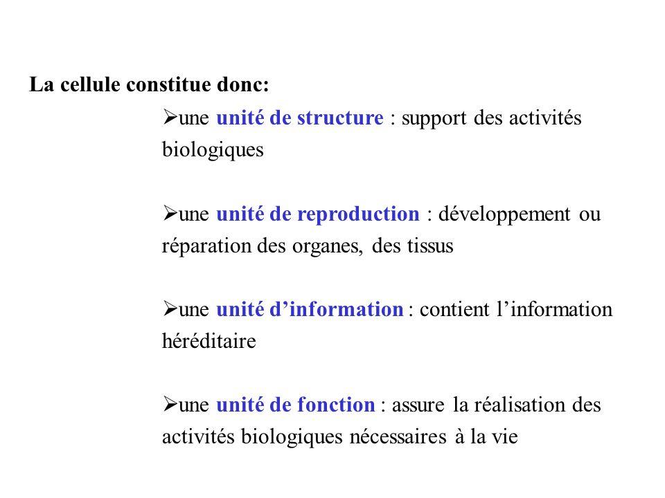 La cellule constitue donc: une unité de structure : support des activités biologiques une unité de reproduction : développement ou réparation des orga