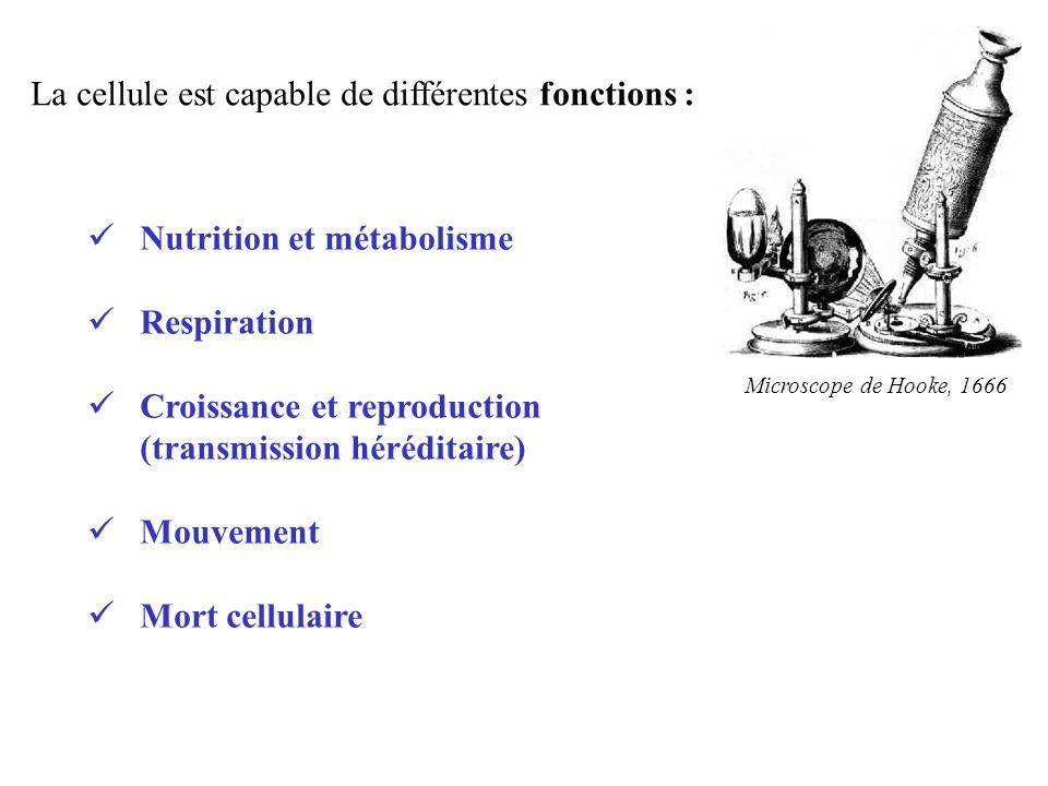 La cellule est capable de différentes fonctions : Microscope de Hooke, 1666 Nutrition et métabolisme Respiration Croissance et reproduction (transmiss