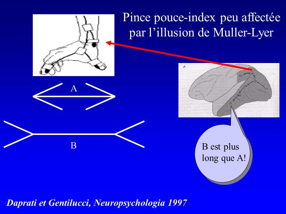 ABAB B est plus long que A! Daprati et Gentilucci, Neuropsychologia 1997 Pince pouce-index peu affectée par lillusion de Muller-Lyer
