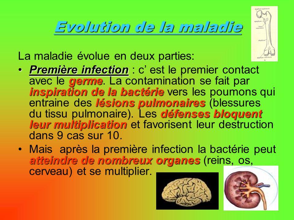 Evolution de la maladie La maladie évolue en deux parties: Première infection : c est le premier contact avec le g gg germe. La contamination se fait