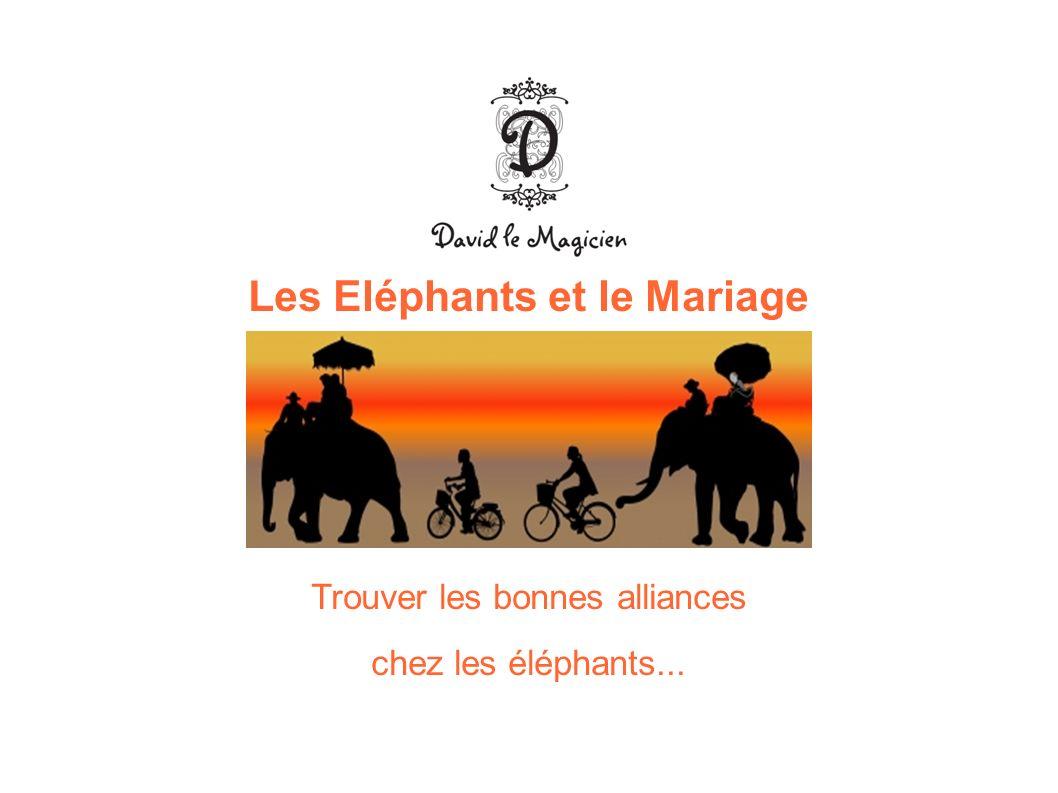 Les Eléphants et le Mariage Trouver les bonnes alliances chez les éléphants...