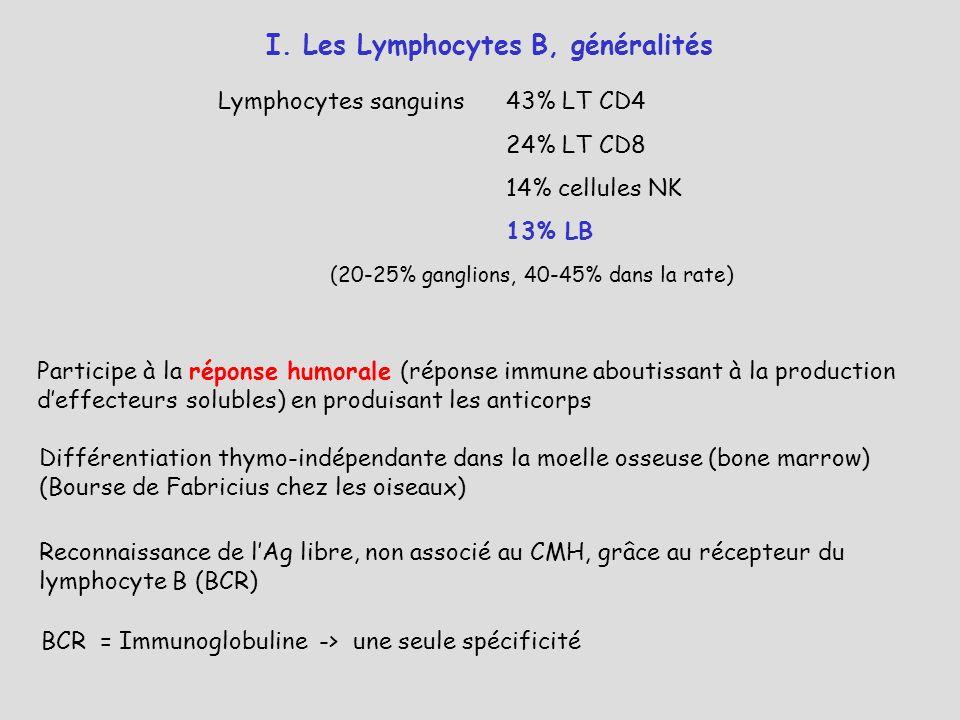 Région génétique codant pour la chaîne lourde H des Ig humaines ADN germinal sur chromosome 14 avant réarrangements et commutation isotypique Chaînes légères : chromosome 2 Chaînes légères : chromosome 22 VDJ >100>10>4