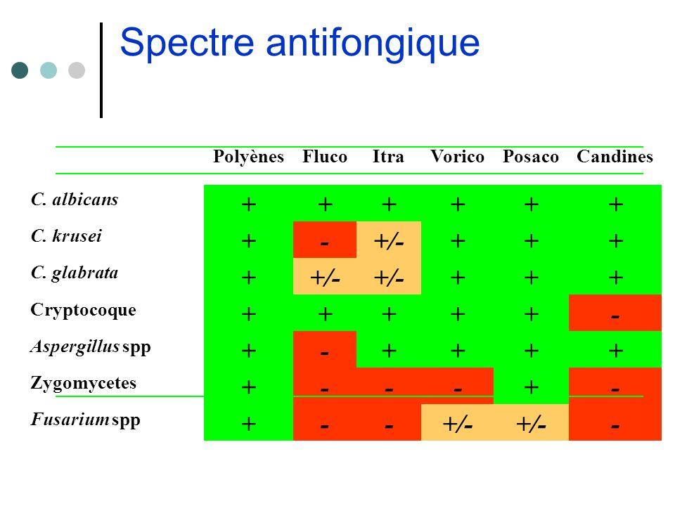 Spectre antifongique PolyènesFlucoItraVoricoPosacoCandines C. albicans ++++++ C. krusei +-+/-+++ C. glabrata ++/- +++ Cryptocoque +++++- Aspergillus s