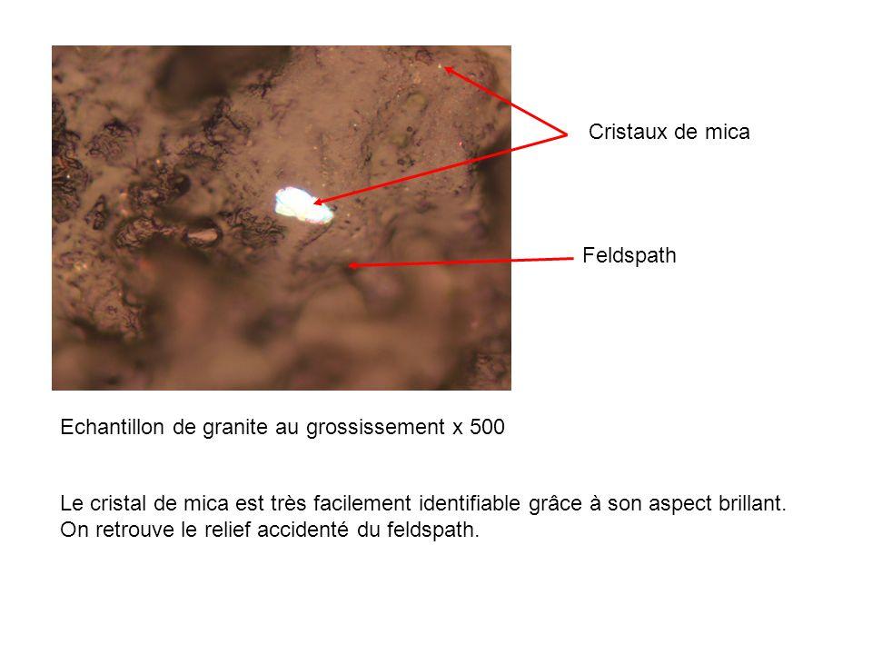 Echantillon de granite au grossissement x 500 Cristaux de mica Feldspath Le cristal de mica est très facilement identifiable grâce à son aspect brilla