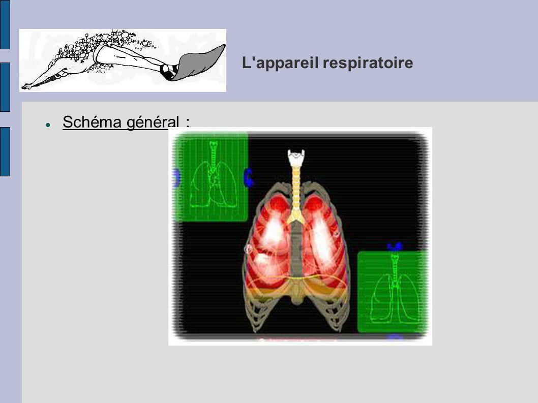 L'appareil respiratoire Schéma général :