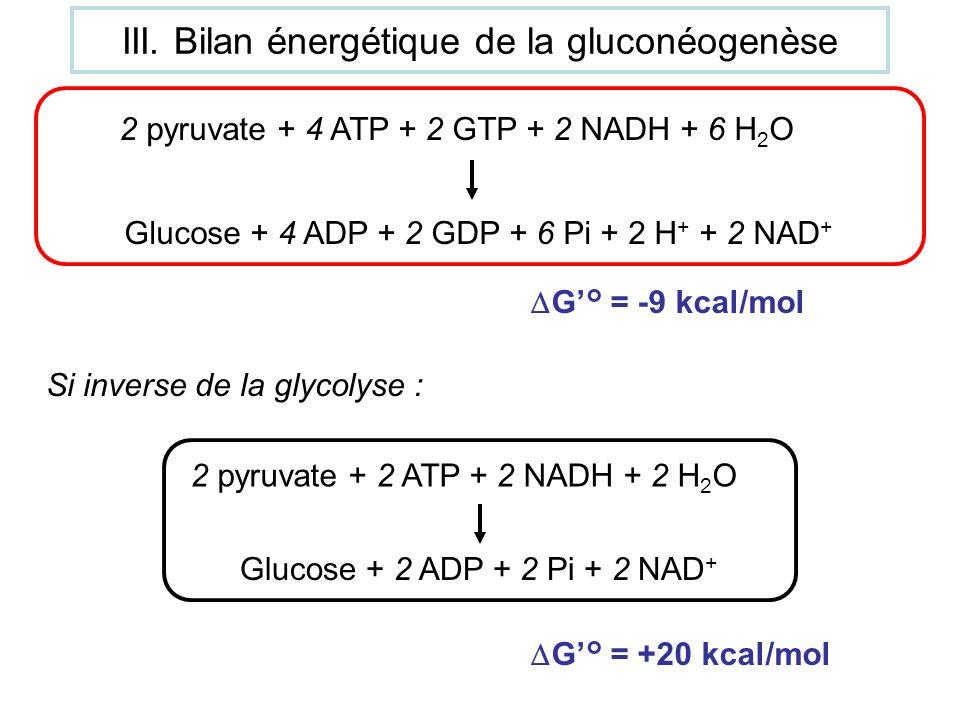 G° = -9 kcal/mol Si inverse de la glycolyse : 2 pyruvate + 2 ATP + 2 NADH + 2 H 2 O Glucose + 2 ADP + 2 Pi + 2 NAD + G° = +20 kcal/mol 2 pyruvate + 4