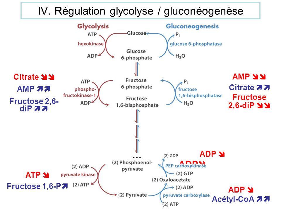 ADP Acétyl-CoA AMP Citrate Fructose 2,6-diP Citrate AMP Fructose 2,6- diP … ATP Fructose 1,6-P ADP IV. Régulation glycolyse / gluconéogenèse