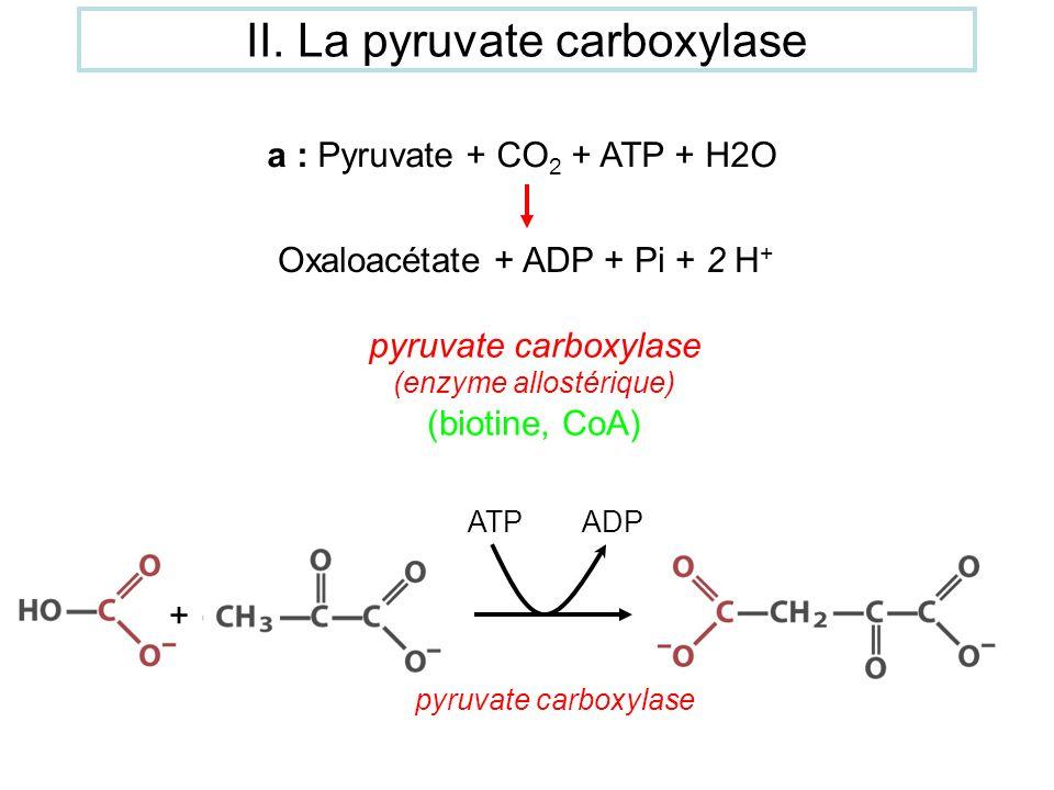 a : Pyruvate + CO 2 + ATP + H2O Oxaloacétate + ADP + Pi + 2 H + pyruvate carboxylase (enzyme allostérique) (biotine, CoA) + ATPADP pyruvate carboxylas
