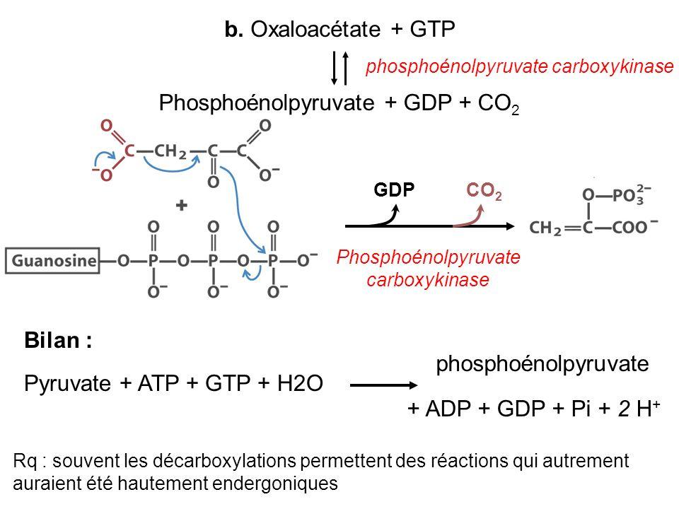 b. Oxaloacétate + GTP Phosphoénolpyruvate + GDP + CO 2 phosphoénolpyruvate carboxykinase Bilan : Pyruvate + ATP + GTP + H2O + ADP + GDP + Pi + 2 H + P