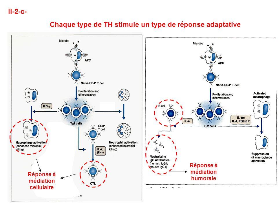II-2-c- Chaque type de TH stimule un type de réponse adaptative Réponse à médiation cellulaire Réponse à médiation humorale