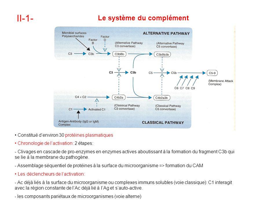 II-1- Le système du complément Constitué denviron 30 protéines plasmatiques Chronologie de lactivation: 2 étapes: - Clivages en cascade de pro-enzymes en enzymes actives aboutissant à la formation du fragment C3b qui se lie à la membrane du pathogène.