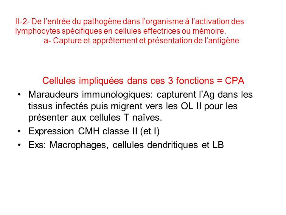 II-2- De lentrée du pathogène dans lorganisme à lactivation des lymphocytes spécifiques en cellules effectrices ou mémoire.