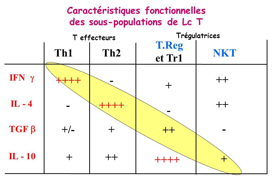 Caractéristiques fonctionnelles des sous-populations de Lc T Th1Th2 IFN IL - 4 TGF ++++ +/- ++ + - - T.Reg et Tr1 IL - 10 - + ++++ + ++ ++++ NKT ++ +