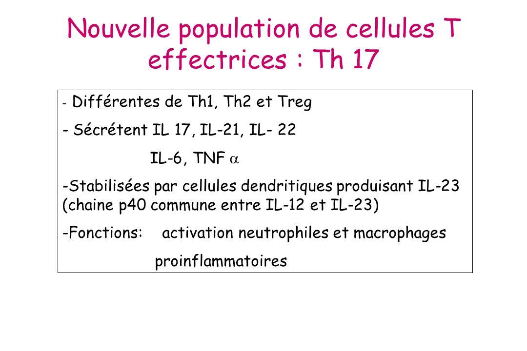 Nouvelle population de cellules T effectrices : Th 17 - Différentes de Th1, Th2 et Treg - Sécrétent IL 17, IL-21, IL- 22 IL-6, TNF -Stabilisées par ce
