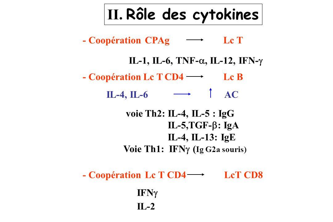 II. Rôle des cytokines - CoopérationCPAgLc T IL-1, IL-6, TNF-, IL-12, IFN- - CoopérationLc TLc B CD4 IL-4, IL-6AC voie Th2: IL-4, IL-5 : IgG IL-5,TGF-