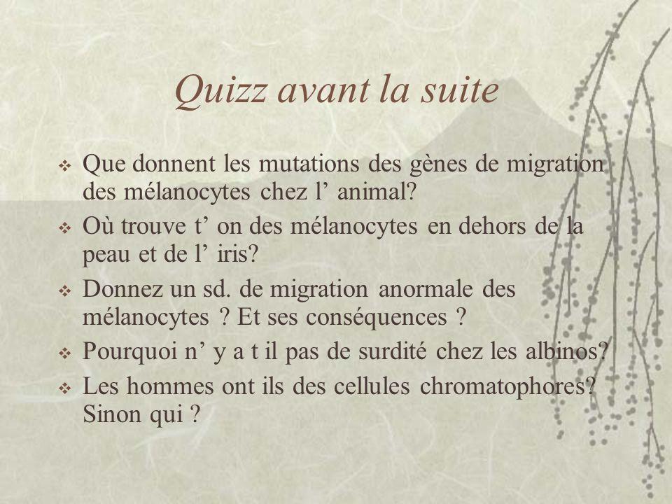 Quizz avant la suite Que donnent les mutations des gènes de migration des mélanocytes chez l animal? Où trouve t on des mélanocytes en dehors de la pe